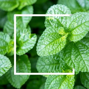 हरी पत्तियों की पृष्ठभूमि सफेद कागज के फ्रेम के साथ होती है , सार, कला, पृष्ठभूमि पृष्ठभूमि छवि