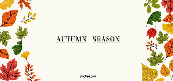 autumn thanksgiving symmetrical fallen leaves beige background, Fallen Leaves, Leaf, Maple Leaves Background image
