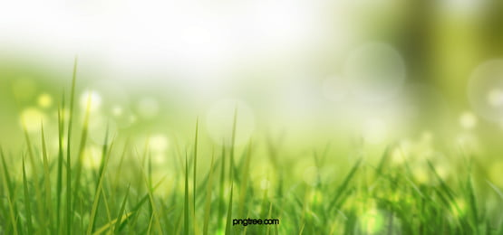 Grass Background Photos Vectors And Psd Files For Free Download Pngtree