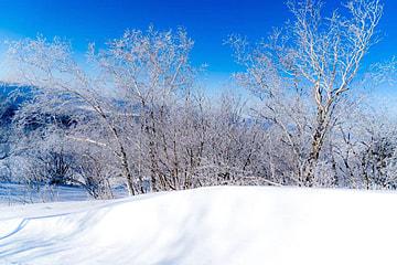 blue winter beautiful snow scene natural scenery