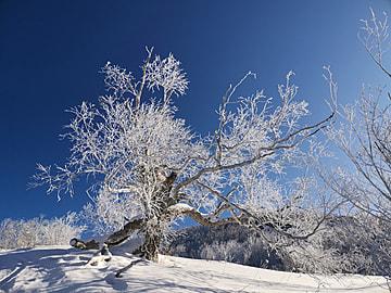 cold winter snow scene