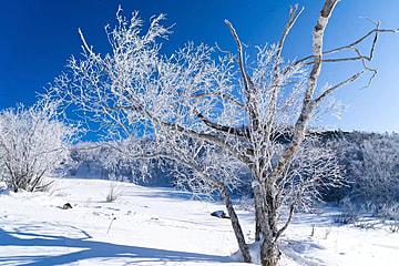 dry tree in winter snow scene sunset glow