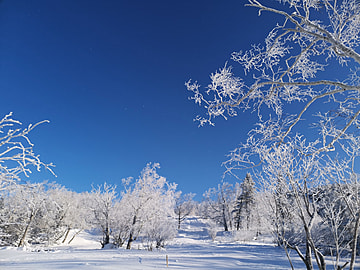 forest scenery in the snow