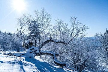 park morning winter cold landscape