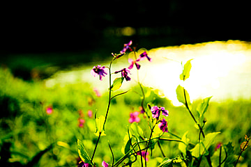 Nature Background Photos And Wallpaper For Free Download