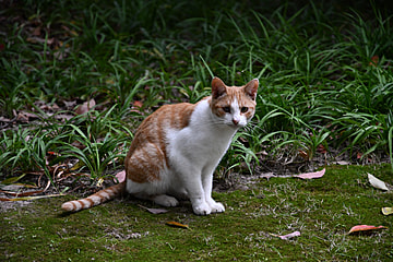 a quiet cat by the grass
