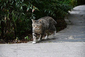 cute tabby cat on the trail