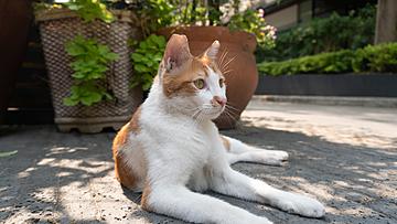 a cat stretching in the sun