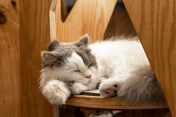 cozy fluffy cute sleeping puppet cat