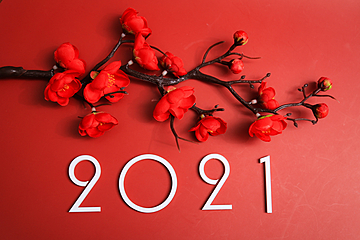red plum blossoms on red festive background and white 2021 new year numbers