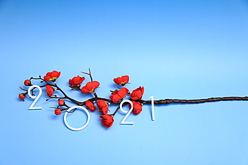 red plum bouquet on white 2021 blue background new year wallpaper