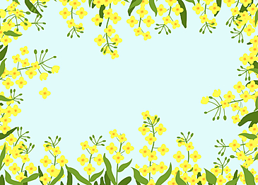 spring rape blossom illustration background