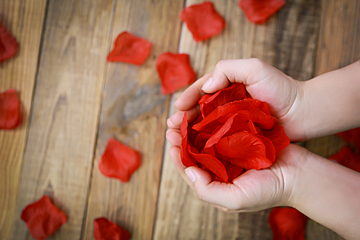hand holding red rose flower romantic valentines day