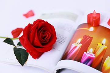 red rose placed on the book