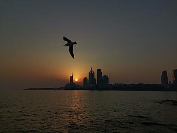 sunrise and seagulls in seaside city