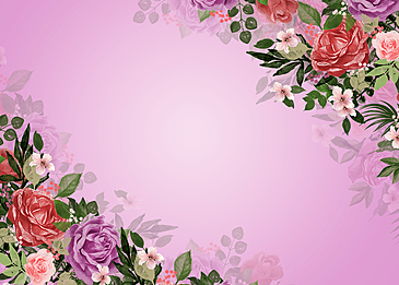 beautiful rose flower background