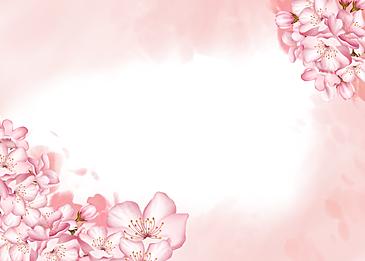 sakura blossom blooming cherry tree background