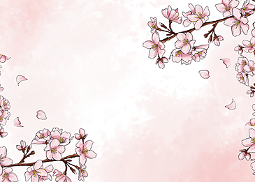 cherry tree blooming pink background
