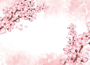 pink beautiful cherry blossom petals background