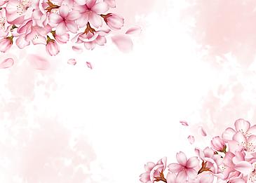 pink cherry blossom background