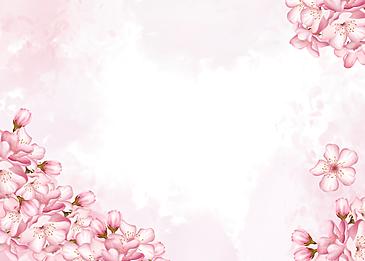 pink sakura flowers blooming background