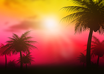 summer abstract silhouette of coconut tree under the sun