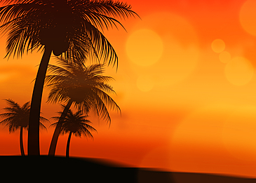 summer abstract silhouette of tree under orange sky