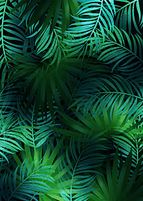 creative background of palm leaf plant green leaves