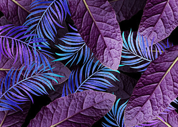 creative background of palm leaves