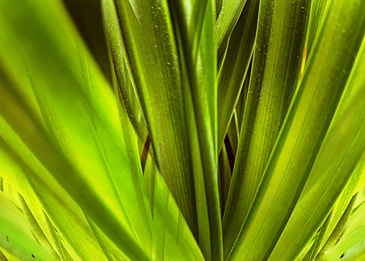 creative background of tropical plant large leaves and palm leaves