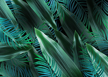creative background of tropical plant leaves and palm leaves
