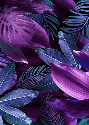 palm leaves purple creative background
