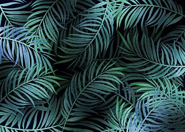 plant leaves dark green palm background