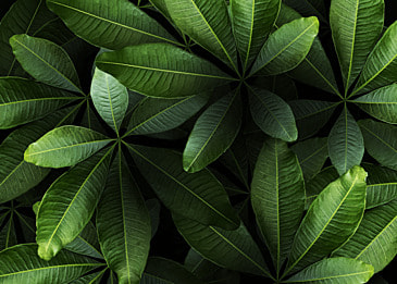 plant leaves emerald green palm leaves black background