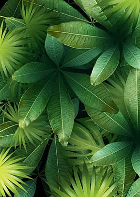 tropical plant fresh leaves palm leaf background