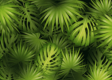 tropical plant leaves palm leaves creative green background