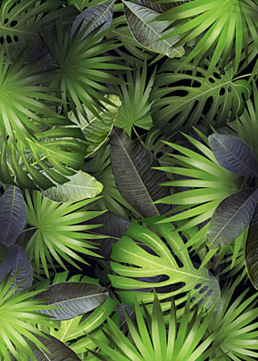 tropical plants have a variety of leaves and palm leaf background
