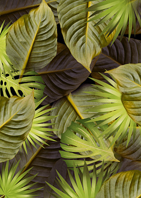 yellow palm leaf background of tropical plants