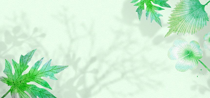 flower shadow green leaf background