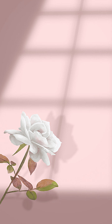 flower and shadow pink mobile phone wallpaper