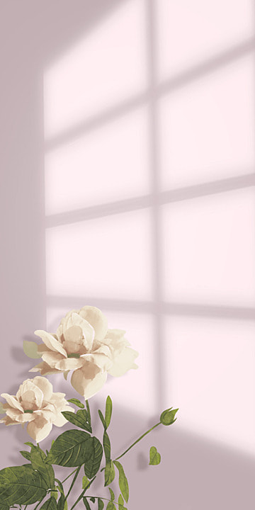 flowers and shadows pink wall flower background