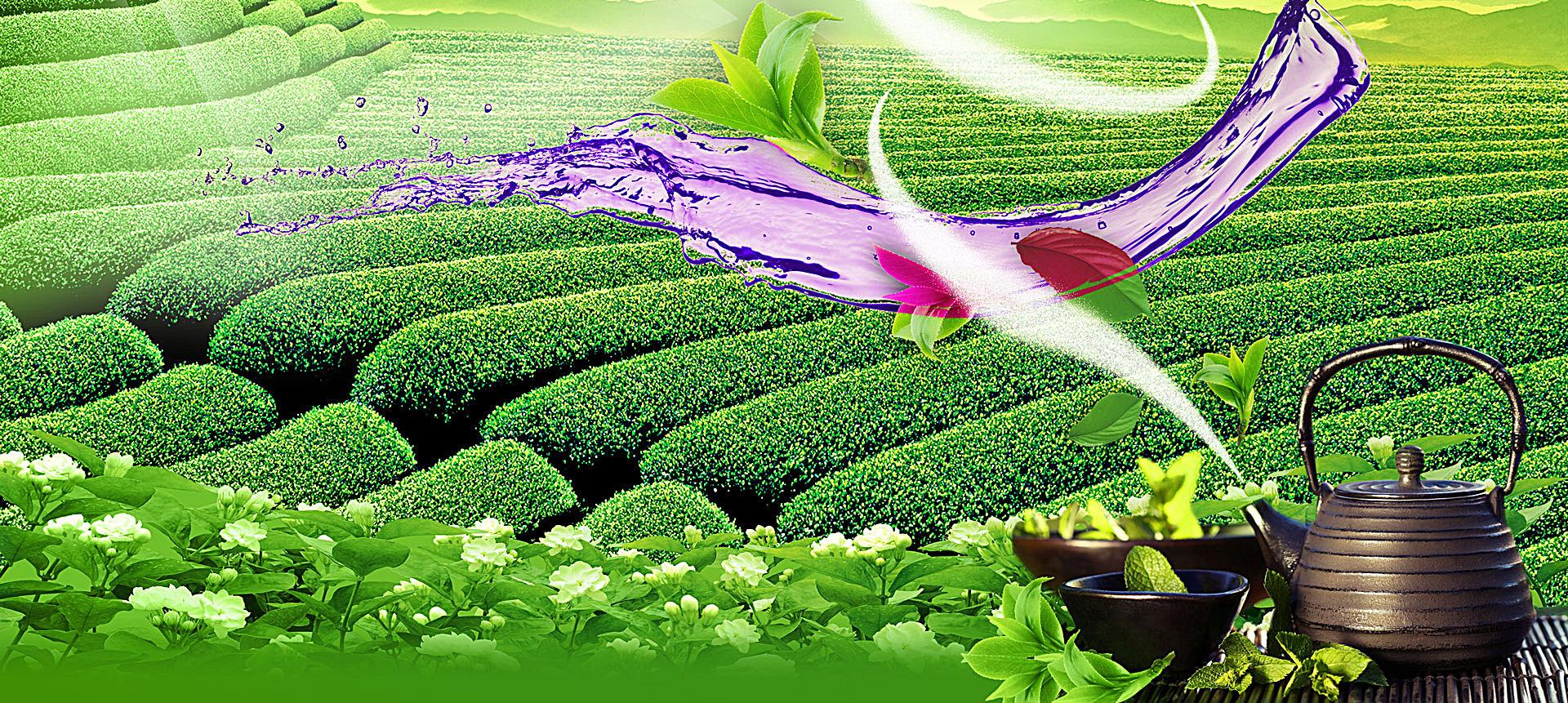 Planta acuática planta acuática plantas vasculares Natural Jardin ...