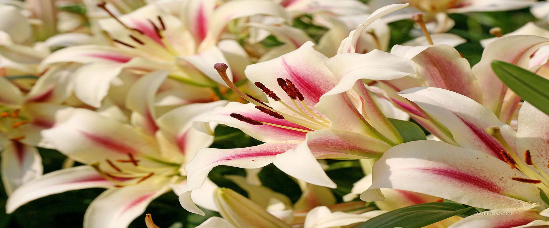Bouquet flower arrangement lily arrangement background flower pink bouquet flower arrangement lily arrangement background izmirmasajfo