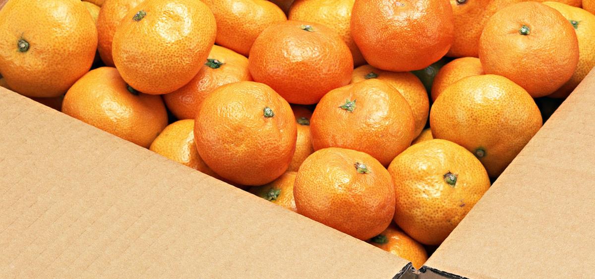 Image result for संतरे के फल