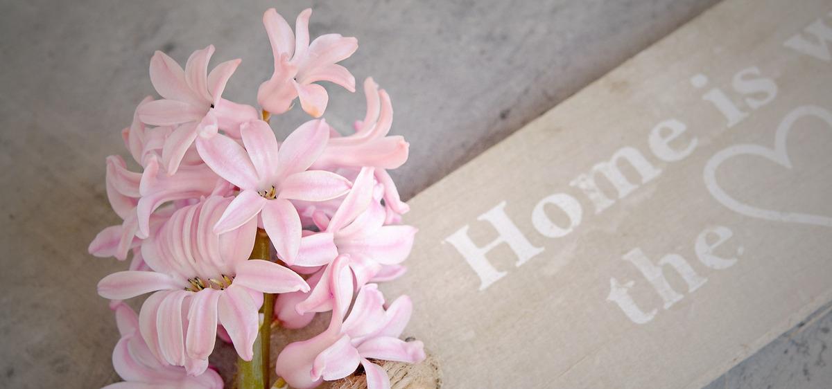 Flower Plant Hyacinth Flowers Background, Vascular, Plant, Bouquet ...