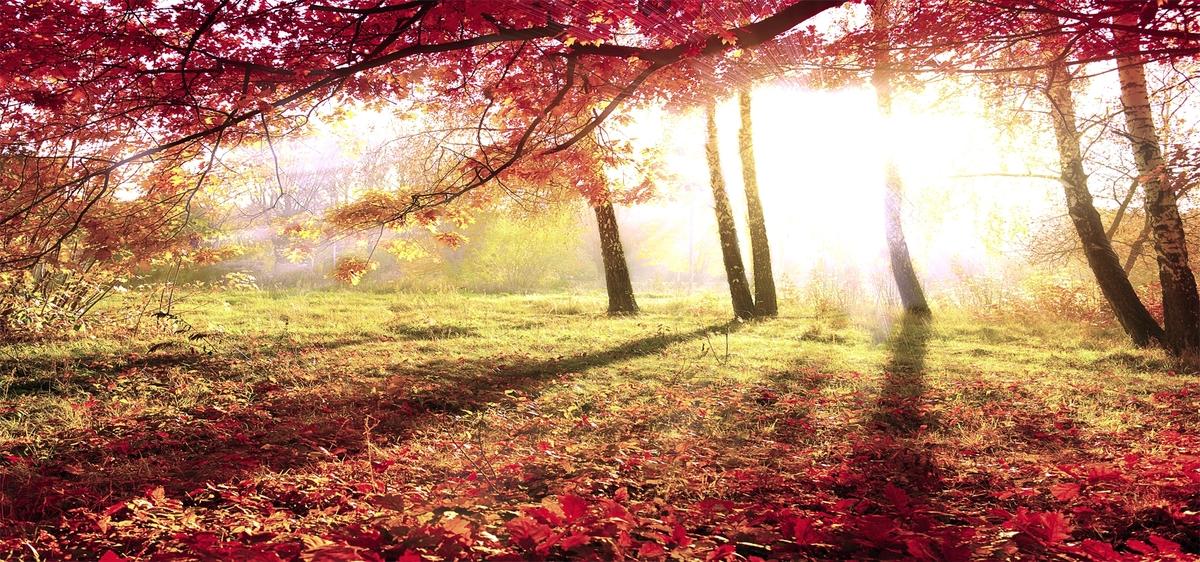 Cranberry Beerenbaum Herbst Hintergrund Maple Fallen Geniessbare