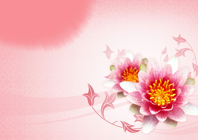 Lotus Flower Pink Floral Background Plant Decoration Blossom
