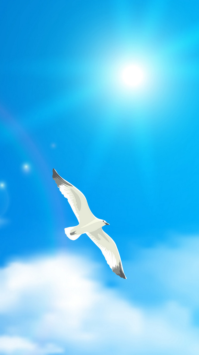 bird flying flight sky background wing gull seagull background