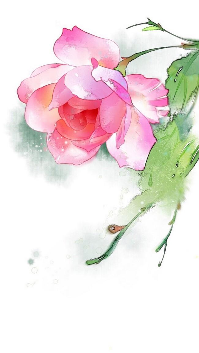 Acquarello Dipinto Su Sfondo Rosa Fiore Blossom Floreale Bouquet