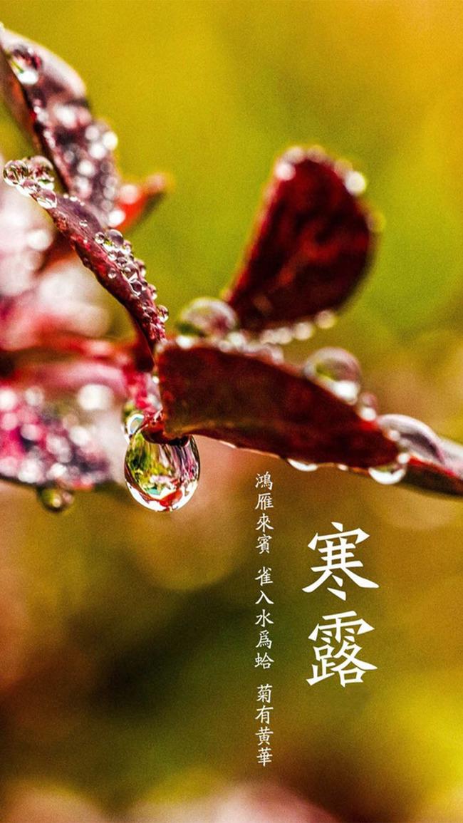 Plantes Vasculaires Plantes Crapaud Lily Arbustes Herb Fleur